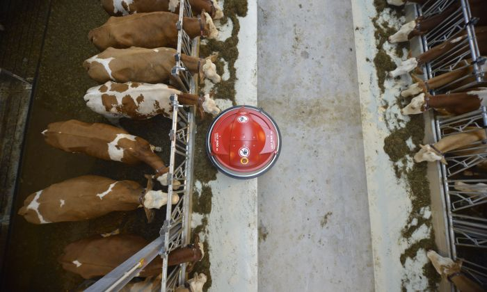 Automatic feed pushing robot at a dairy farm in The Netherlands. Lely International.
